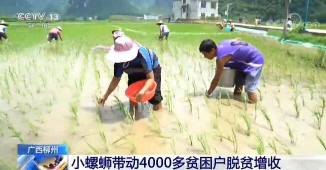 小螺蛳带动广西柳州4000多贫困户脱贫增收